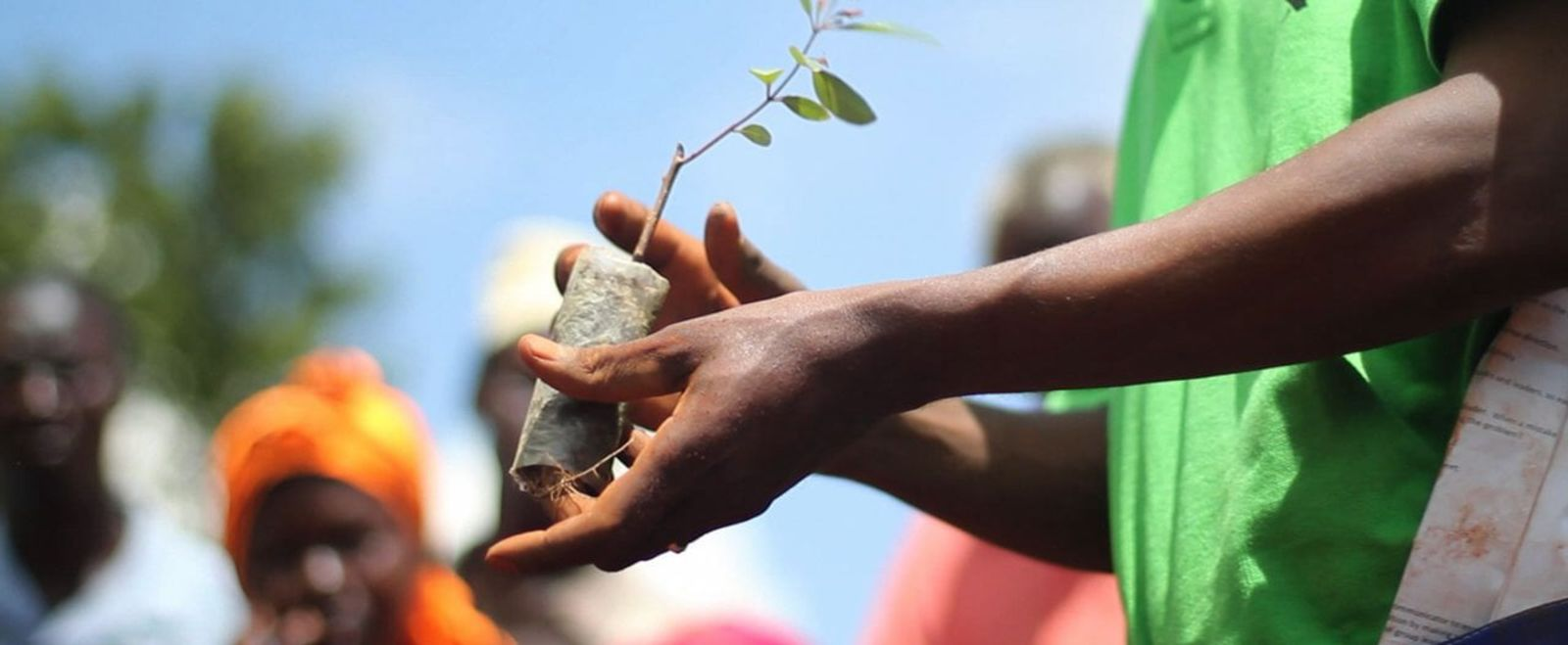Hands hold up a baby tree as a crowd looks on.